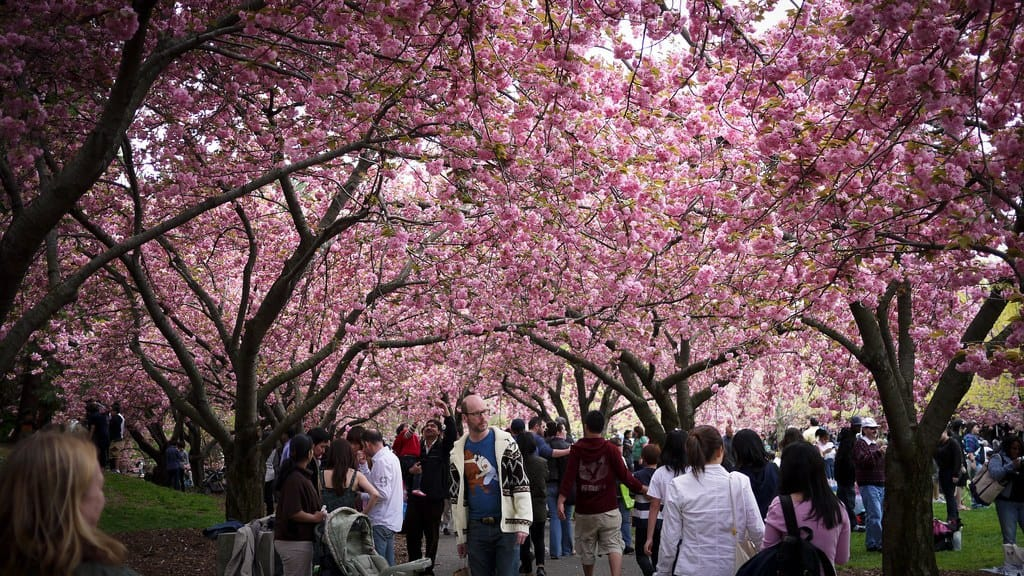 40 cheap things to do in nyc today - Brooklyn botanical garden admission ...